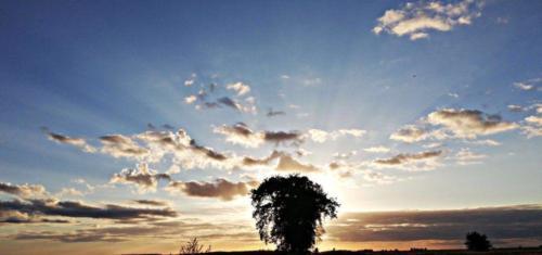 Złociste niebo